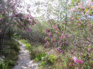 Strolling among blooms in Silvermine