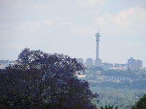Jacarandas & some smog