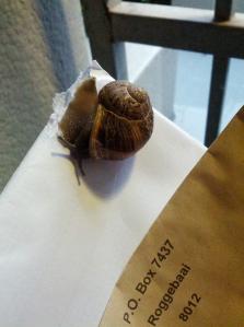 Snail mail. It's still winter in Cape Town.