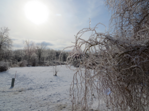 Remains of an ice storm