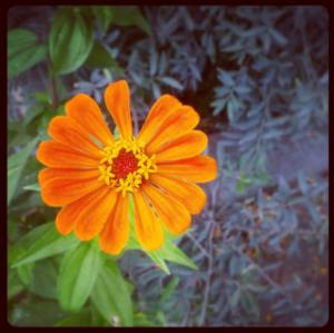Flowers of Joburg #3
