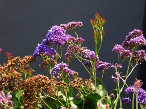Flowers of Joburg #2