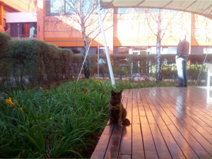 More random: the cat of Neotel