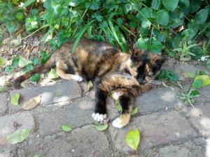 Baby enjoying her garden