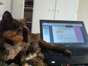 My cat didn't think much of my regulatory work